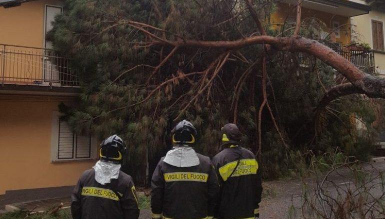 Caduta albero Lamezia, intervento dei Vigili del Fuoco