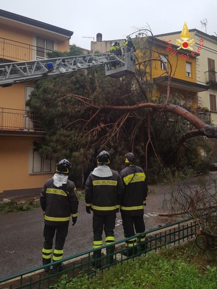 Caduta albero Lamezia