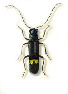 Nuovo insetto Montalto