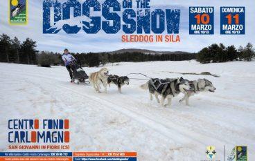 Sleddog in Sila, torna la corsa di cani da slitta più a Sud d'Europa