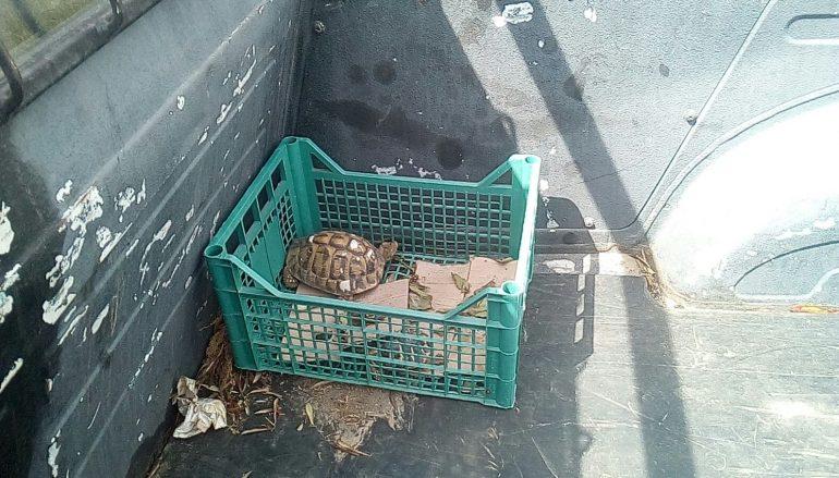 Portate in salvo due tartarughe a Bianco