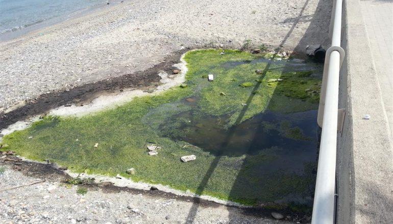 """Crea: """"Gravi criticità igienico sanitari sulla spiaggia di Pellaro"""""""