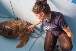 La tartaruga Nazzareno