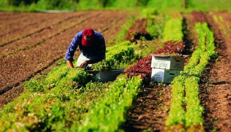 Agricoltura calabrese, pagamenti in arrivo