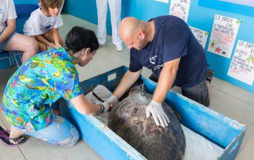 Centro Recupero Tartarughe Marine di Brancaleone: aggiornamenti
