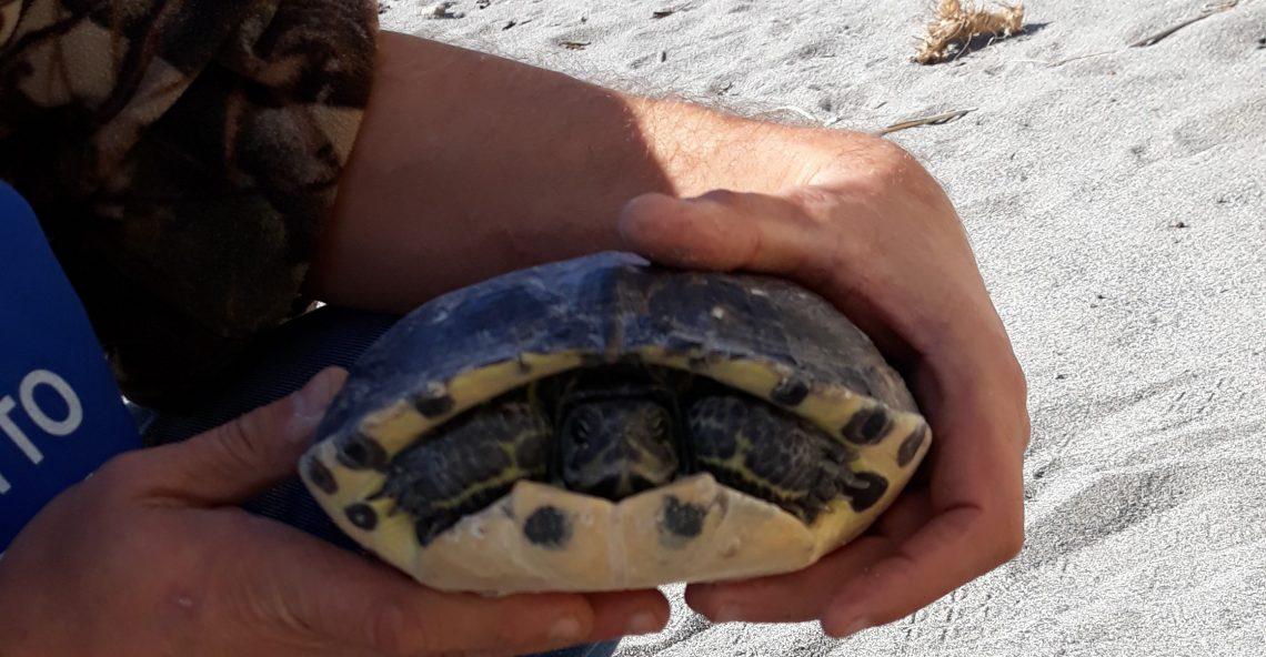 Recupero di una tartaruga a Melito Porto Salvo