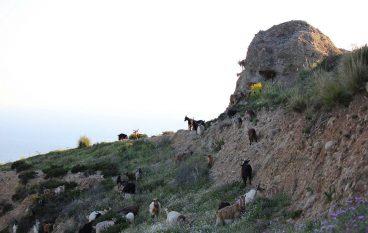 """Agricoltura, pubblicati i pre-bandi del GAL """"Terre Locridee"""""""