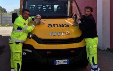 Due cantonieri salvano cuccioli sulla Statale 682