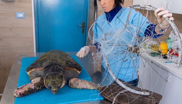 Tartaruga soccorsa a Pellaro, rischia di perdere le pinne