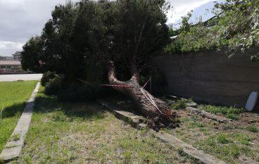 Lazzaro, crolla albero in Piazza Zagarella