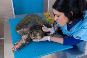 Morta la tartaruga Afrodite