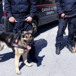 Allevatori scomparsi a Petilia Policastro: ancora ricerche