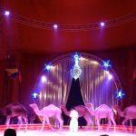"""Incidente al Circo """"Lidia Togni"""" a Gioiosa Jonica: cade da 8 metri"""