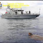 Salvata tartaruga Caretta - Caretta a Gioia Tauro
