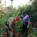 Rivenuta piantagione di canapa indiana a Montebello Jonico