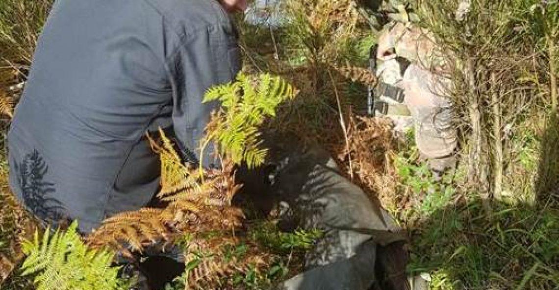 Cannabis a Roccaforte del Greco, sequestrata piantagione. Trovate armi