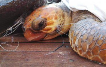 Salvataggio di tartaruga marina a largo di Capo Bruzzano