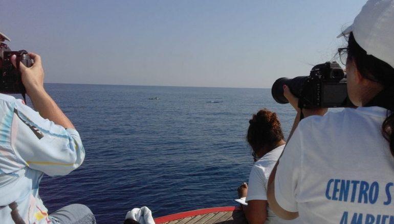 Il CE.S.R.A.M. ottiene la certificazione Friend of the Sea