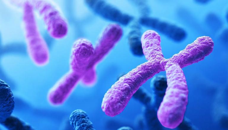 Mancanza del cromosoma X: la Sindrome di Turner