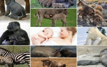 Mamme mammifere: amore perfetto