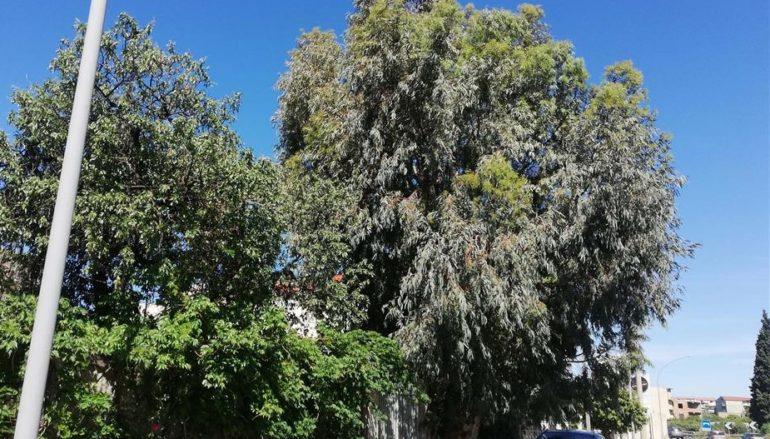 Lazzaro (RC). Urge sistemazione alberi che minacciano pericolo